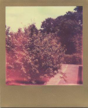 Polaroid Gold Edition